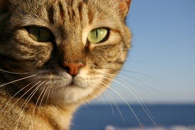 Pasaulinė gyvūnijos diena, šv. Pranciškus