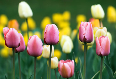 Tarptautinė biologinės įvairovės diena