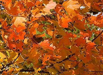 Šv. Martynas, paskutinė rudens šventė